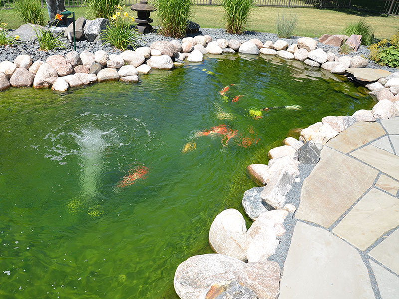 Pond Supplies - Japanese Koi Fish - foods, water quality products - Pond Supplies » Natural Environments Landscaping - Fargo, North Dakota